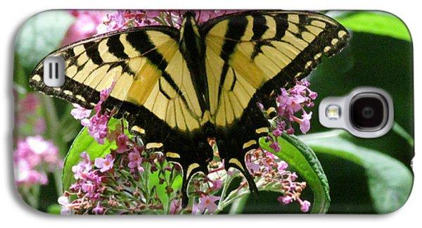 Randi Shenkman Galaxy S4 Cases - Tiger Swallowtail Butterfly Galaxy S4 Case by Randi Shenkman