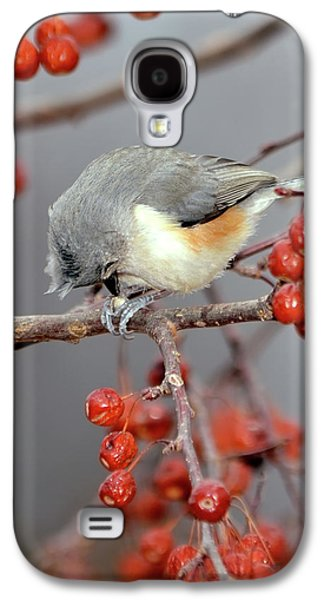 Tufted Titmouse Galaxy S4 Cases - Titmouse Breakfast Galaxy S4 Case by Betty LaRue