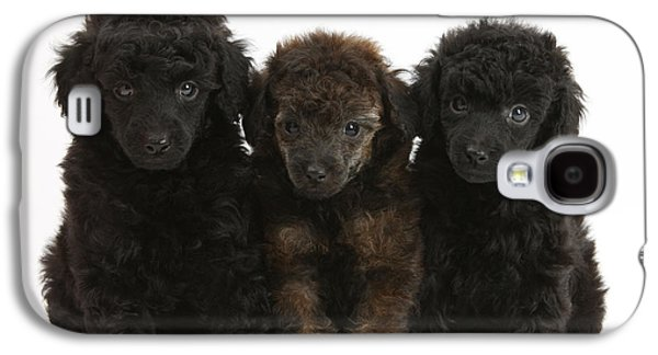 Domesticated Animals Galaxy S4 Cases - Toy Poodle Pups Galaxy S4 Case by Mark Taylor