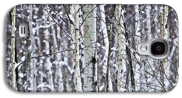 January Galaxy S4 Cases - Tree trunks covered with snow in winter Galaxy S4 Case by Elena Elisseeva