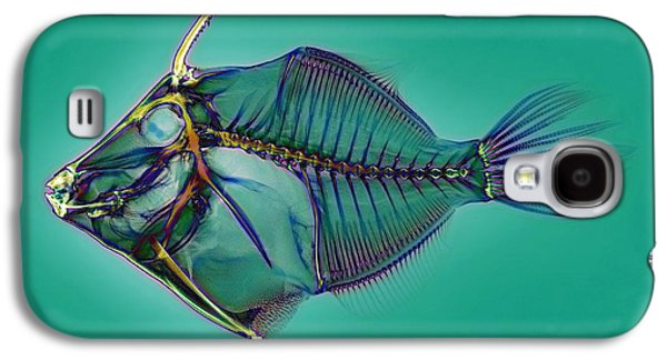 False-colour Galaxy S4 Cases - Triggerfish Skeleton, X-ray Galaxy S4 Case by D. Roberts