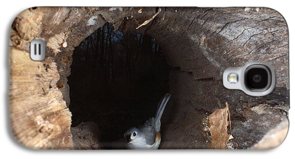 Tufted Titmouse Galaxy S4 Cases - Tufted Titmouse In A Log Galaxy S4 Case by Ted Kinsman