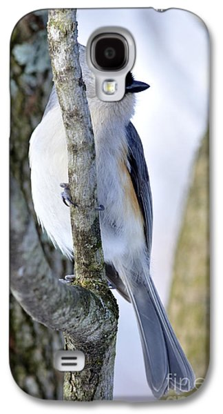 Tufted Titmouse Galaxy S4 Cases - Tufted Titmouse on Dogwood Galaxy S4 Case by Thomas R Fletcher