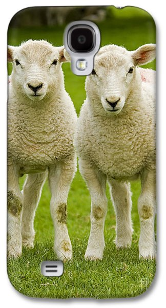 Youth Galaxy S4 Cases - Twin Lambs Galaxy S4 Case by Meirion Matthias
