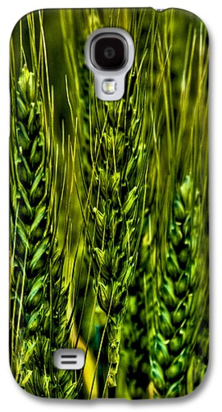 Surreal Landscape Galaxy S4 Cases - Unripened Wheat Galaxy S4 Case by David Patterson