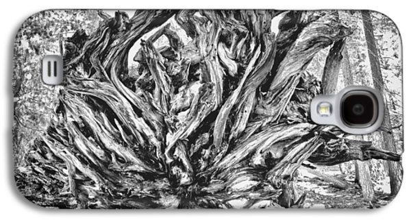 Tree Roots Galaxy S4 Cases - Up Rooted Galaxy S4 Case by Aron Kearney Fine Art Photography