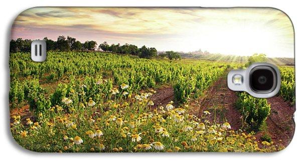Chardonnay Galaxy S4 Cases - Vineyard Galaxy S4 Case by Carlos Caetano