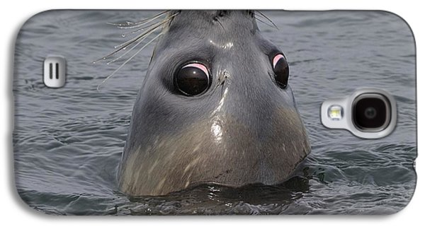 Elephant Seals Galaxy S4 Cases - Weaner Southern Elephant Seal Galaxy S4 Case by Tony Beck