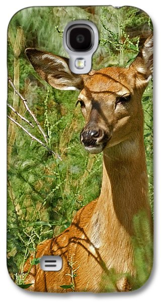 Nature Center Galaxy S4 Cases - Whitetail Doe Painterly Galaxy S4 Case by Ernie Echols