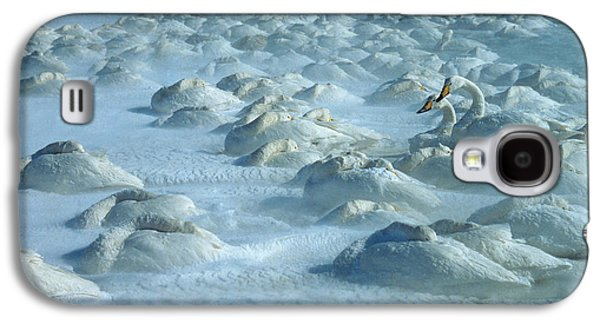Fauna Photographs Galaxy S4 Cases - Whooper Swans in Snow Galaxy S4 Case by Teiji Saga and Photo Researchers
