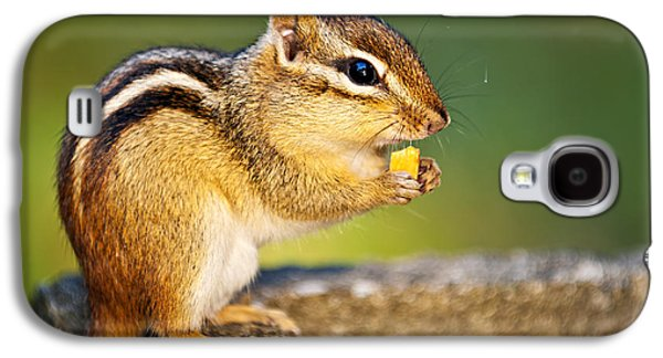 Feeding Galaxy S4 Cases - Wild chipmunk  Galaxy S4 Case by Elena Elisseeva