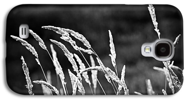 Grass Galaxy S4 Cases - Wild grass in black and white Galaxy S4 Case by Elena Elisseeva