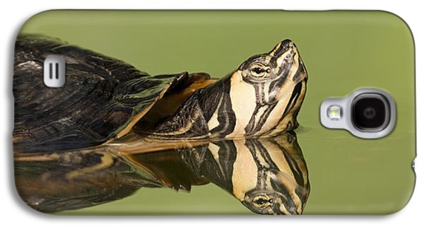 Slider Photographs Galaxy S4 Cases - Yellow-bellied Slider Trachemys Scripta Galaxy S4 Case by Ingo Arndt