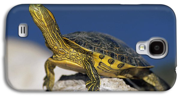 Slider Photographs Galaxy S4 Cases - Yellow-bellied Slider Trachemys Scripta Galaxy S4 Case by Tim Fitzharris