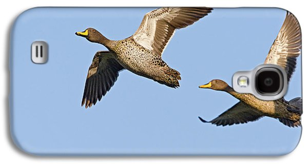 Two Ducks In Flight Photographs Galaxy S4 Cases - Yellow-billed Duck Anas Undulata Pair Galaxy S4 Case by Vincent Grafhorst