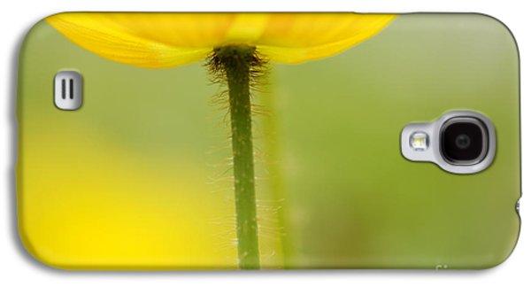 Macro Photographs Galaxy S4 Cases - Yellow Poppy Galaxy S4 Case by Silke Magino