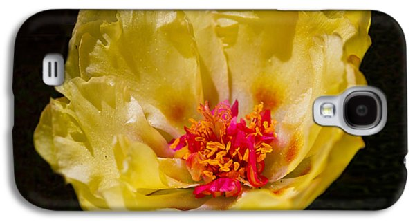 Bright Colors Glass Art Galaxy S4 Cases - Yellow Portulaca Galaxy S4 Case by Mitch Shindelbower