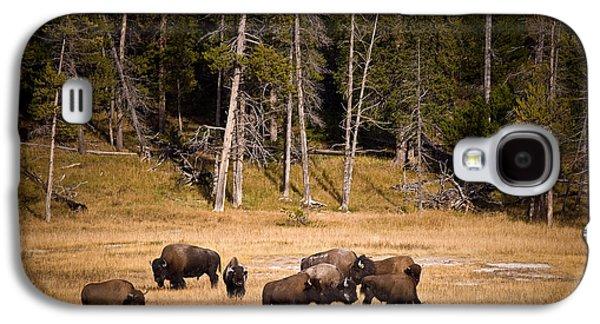 Bison Galaxy S4 Cases - Yellowstone Bison Galaxy S4 Case by Steve Gadomski