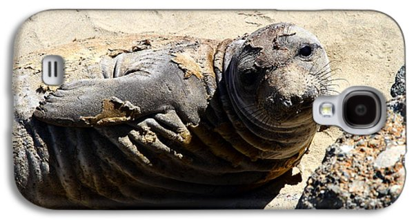 Elephant Seals Galaxy S4 Cases - Young Elephant Seal Molting . 7D16091 Galaxy S4 Case by Wingsdomain Art and Photography
