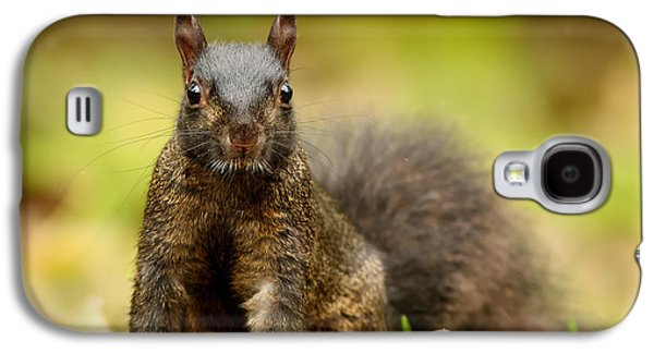 Curious Black Squirrel Galaxy S4 Case by Mircea Costina Photography