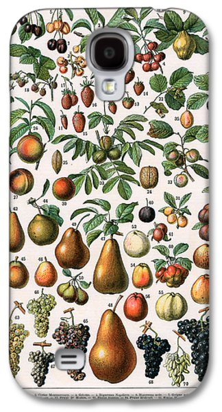 Food And Beverage Drawings Galaxy S4 Cases -  Illustration of Fruit Varieties Galaxy S4 Case by Alillot