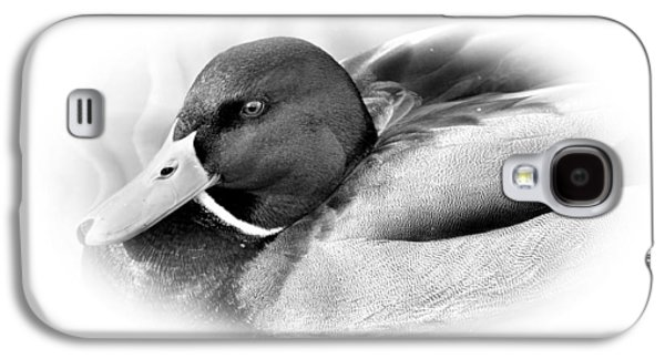 Water Fowl Galaxy S4 Cases -  Mallard Galaxy S4 Case by Todd Hostetter