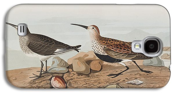 Rocks Drawings Galaxy S4 Cases -  Red backed Sandpiper Galaxy S4 Case by John James Audubon