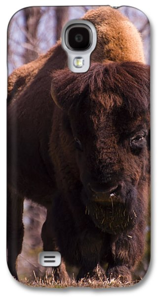 American Bison Galaxy S4 Cases - American Bison Galaxy S4 Case by Chris Flees