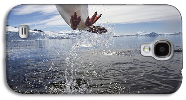 Close Focus Nature Scene Galaxy S4 Cases - Antarctica, Cuverville Island, Gentoo Galaxy S4 Case by Paul Souders