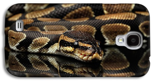 Ball Or Royal Python Snake On Isolated Black Background Galaxy S4 Case by Sergey Taran