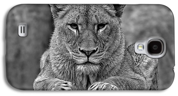 Big Cat Lion Collection Galaxy S4 Case by Marvin Blaine