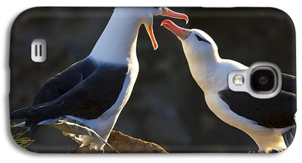 Mud Nest Galaxy S4 Cases - Black-browed Albatross Couple Galaxy S4 Case by Jean-Louis Klein & Marie-Luce Hubert
