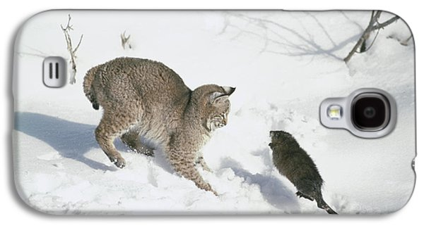 Bobcats Photographs Galaxy S4 Cases - Bobcat Lynx Rufus Hunting Muskrat Galaxy S4 Case by Michael Quinton