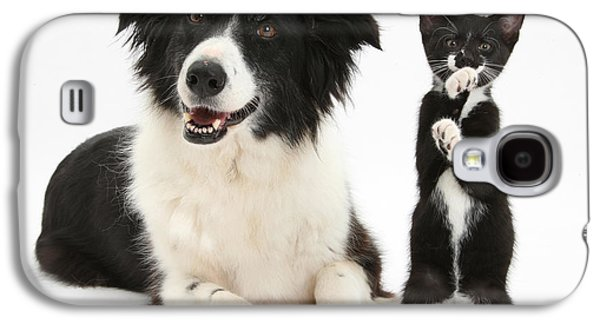 Domesticated Animals Galaxy S4 Cases - Border Collie And Tuxedo Kitten Galaxy S4 Case by Mark Taylor
