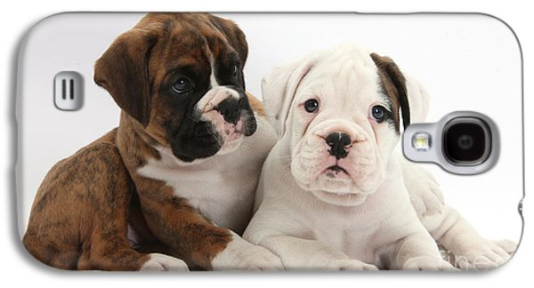 Boxer Galaxy S4 Cases - Boxer Puppies Galaxy S4 Case by Mark Taylor