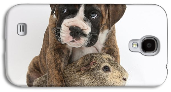 Boxer Galaxy S4 Cases - Boxer Puppy And Guinea Pig Galaxy S4 Case by Mark Taylor