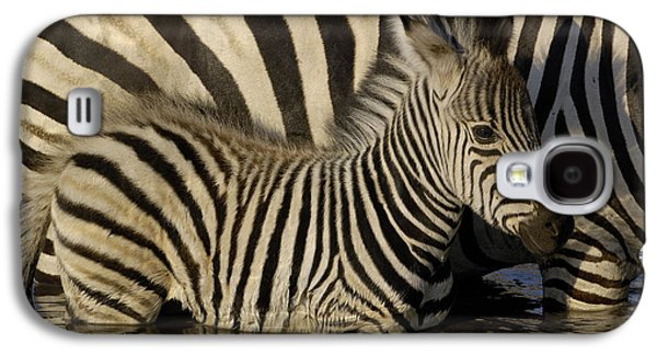 Animals and Earth - Galaxy S4 Cases - Burchells Zebra Equus Burchellii Foal Galaxy S4 Case by Pete Oxford
