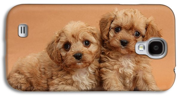 Domesticated Animals Galaxy S4 Cases - Cavapoo Pups Galaxy S4 Case by Mark Taylor
