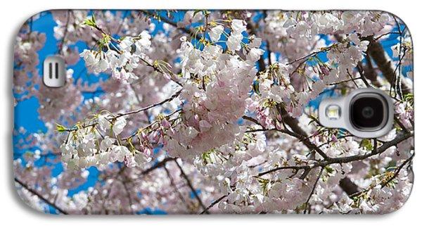 Cherry Tree Galaxy S4 Cases - Cherry Blossom Galaxy S4 Case by Sebastian Musial