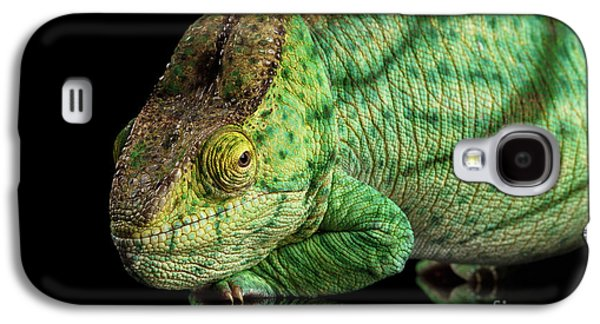 Closeup Parson Chameleon, Calumma Parsoni Orange Eye On Black Galaxy S4 Case by Sergey Taran