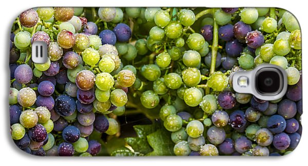 Colorful Wine Grapes On Grapevine Galaxy S4 Case by Teri Virbickis