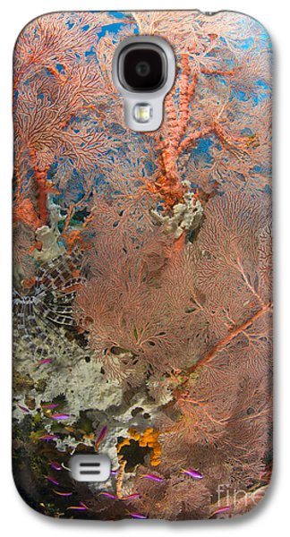 New Britain Galaxy S4 Cases - Colourful Sea Fan With Crinoid, Papua Galaxy S4 Case by Steve Jones