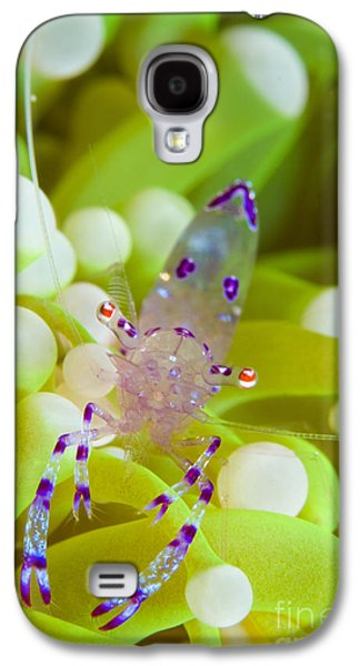 New Britain Galaxy S4 Cases - Commensal Shrimp On Green Anemone Galaxy S4 Case by Steve Jones