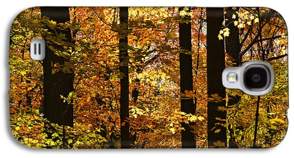 Recreation Photographs Galaxy S4 Cases - Fall forest Galaxy S4 Case by Elena Elisseeva