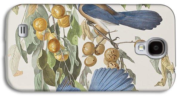 Florida Jay Galaxy S4 Case by John James Audubon