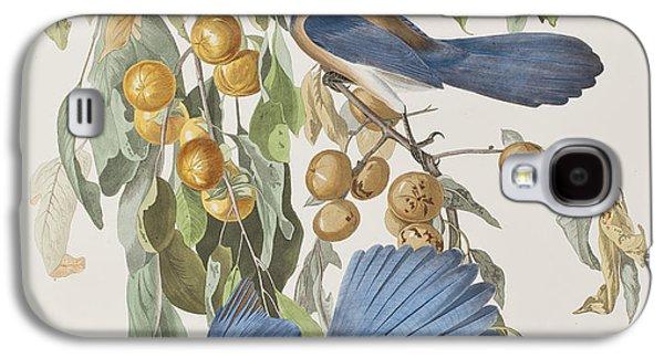 Fruit Tree Galaxy S4 Cases - Florida Jay Galaxy S4 Case by John James Audubon