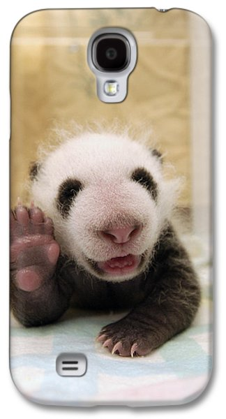 The Nature Center Galaxy S4 Cases - Giant Panda Ailuropoda Melanoleuca Cub Galaxy S4 Case by Katherine Feng