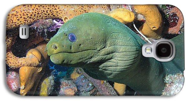 Headshot Galaxy S4 Cases - Green Moray Eel On Caribbean Reef Galaxy S4 Case by Karen Doody