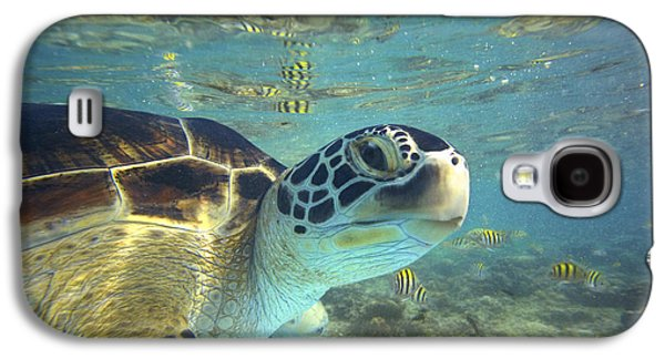 Animals and Earth - Galaxy S4 Cases - Green Sea Turtle Balicasag Island Galaxy S4 Case by Tim Fitzharris