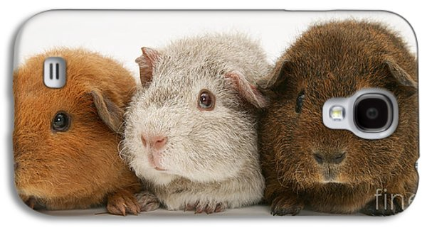 Domesticated Animals Galaxy S4 Cases - Guinea Pigs Galaxy S4 Case by Jane Burton